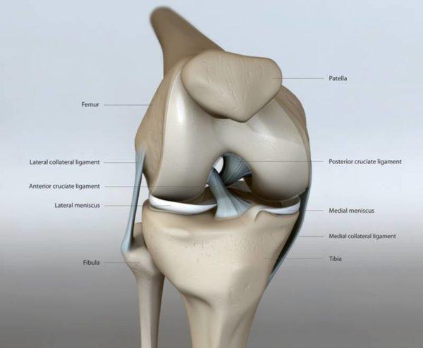 ひざ痛の身体機能診断