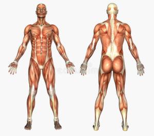 筋機能障害による痛み
